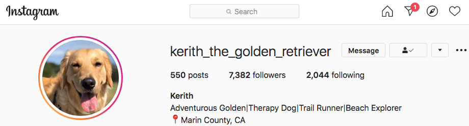 Keith the therapy dog